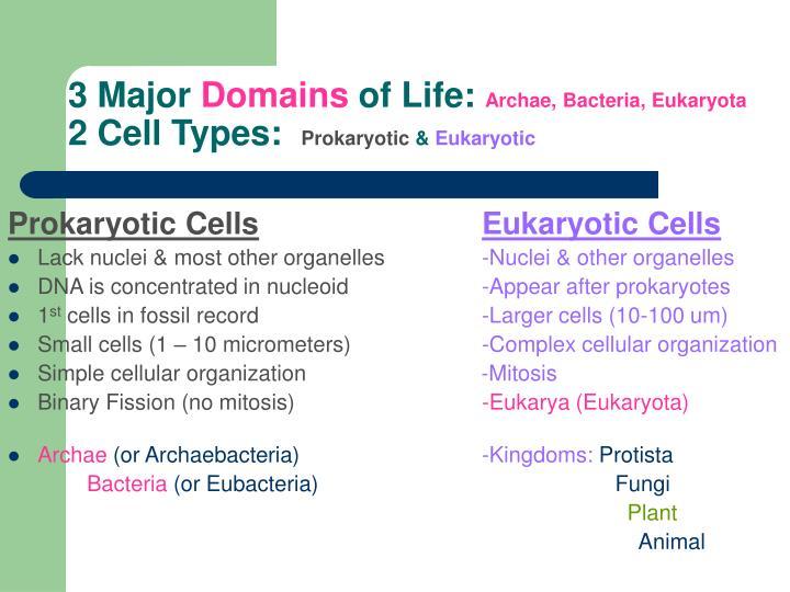 3 major domains of life archae bacteria eukaryota 2 cell types prokaryotic eukaryotic