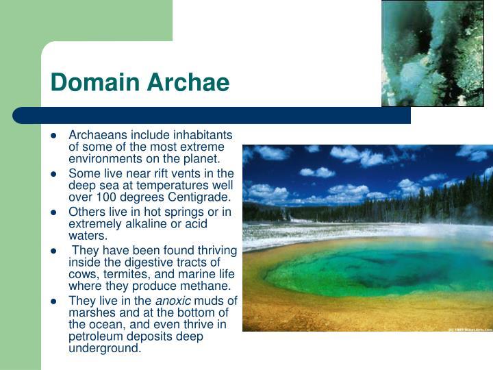 Domain Archae