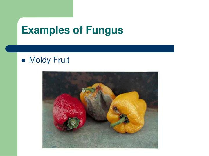 Examples of Fungus