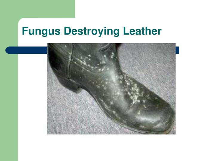 Fungus Destroying Leather