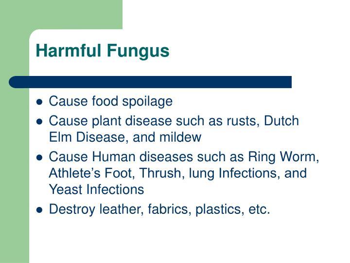 Harmful Fungus