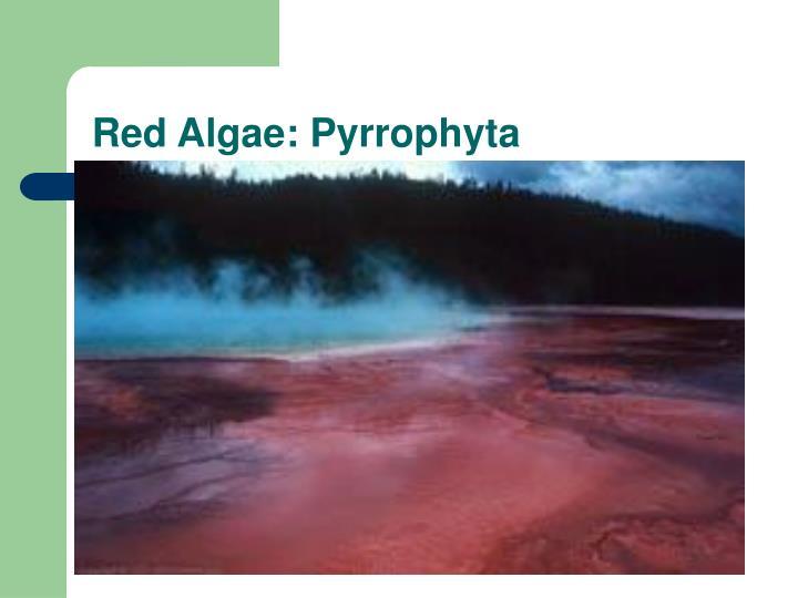 Red Algae: Pyrrophyta