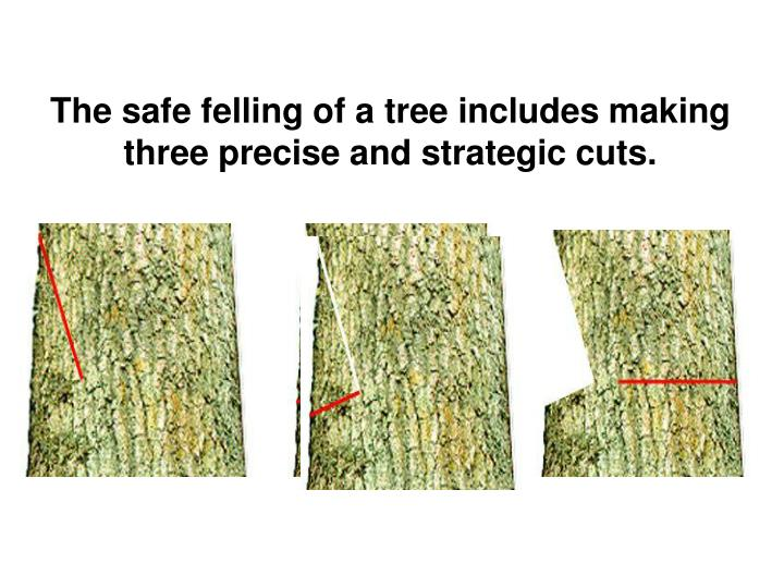 The safe felling of a tree includes making