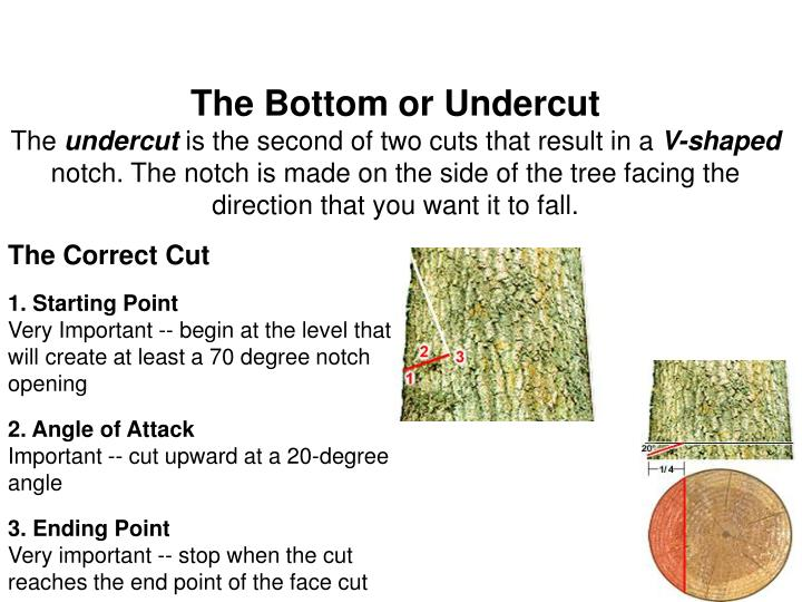 The Bottom or Undercut