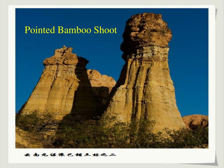Pointed Bamboo Shoot