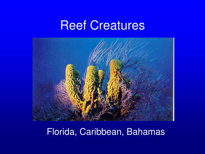 reef creatures n.