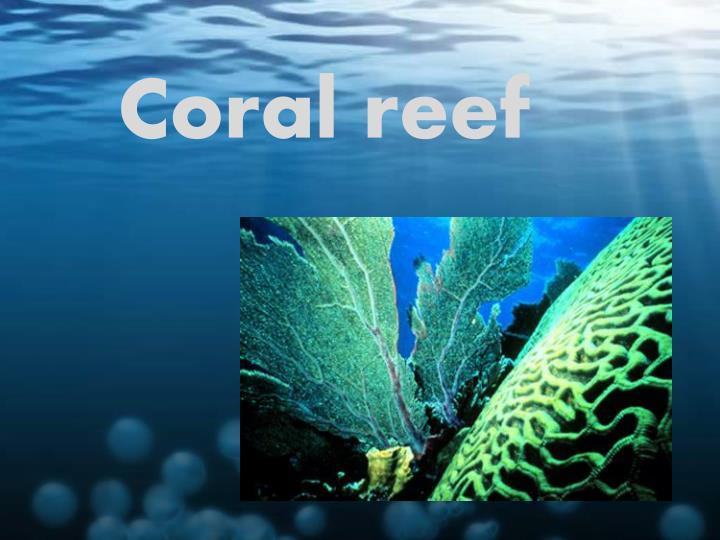 coral reef n.