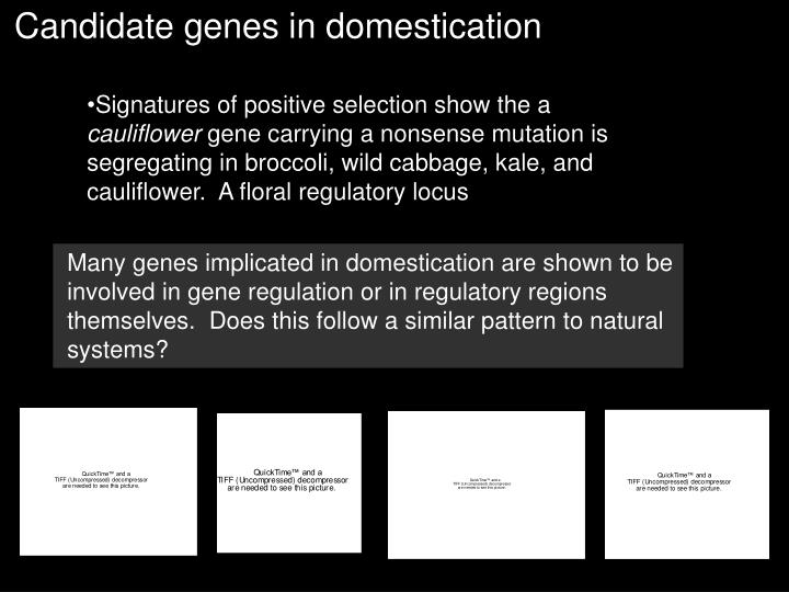 Candidate genes in domestication