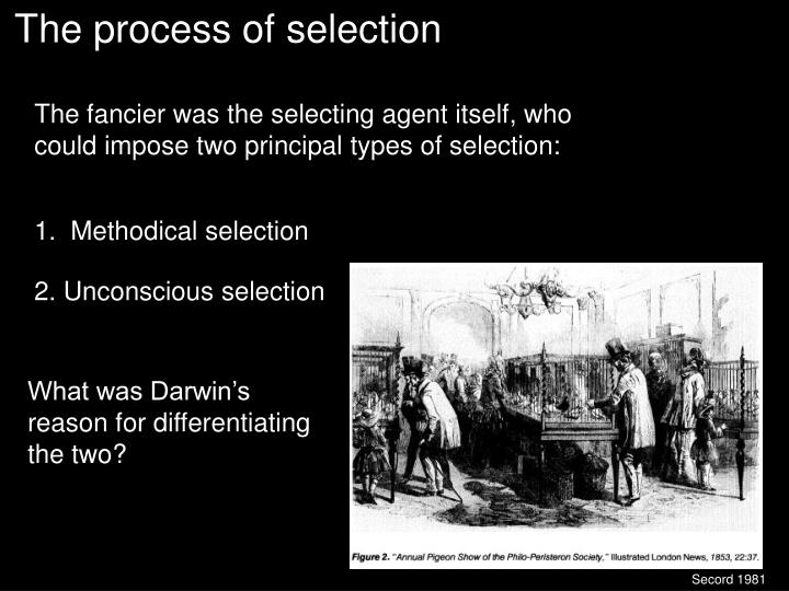 The process of selection