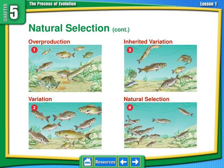5.1 Natural Selection