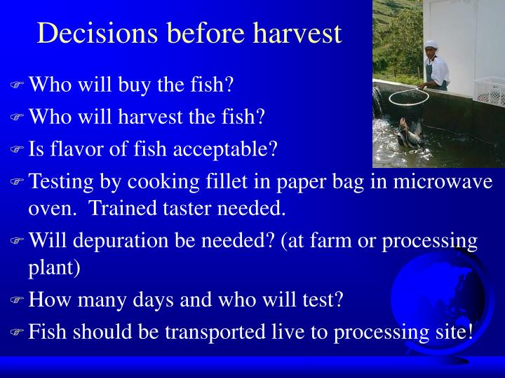 Decisions before harvest