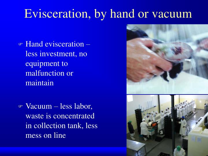 Evisceration, by hand or vacuum