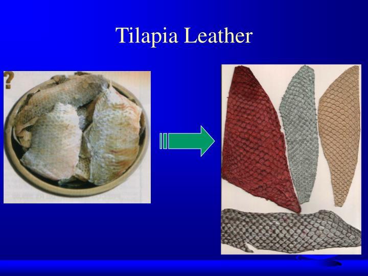 Tilapia Leather