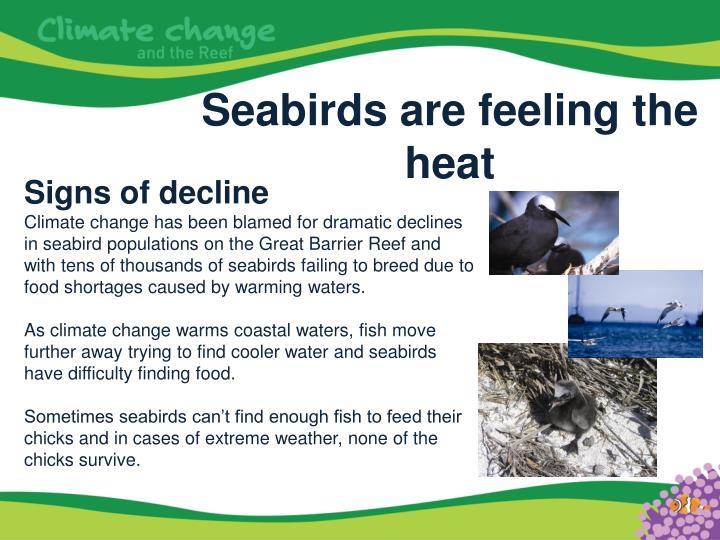Seabirds are feeling the heat