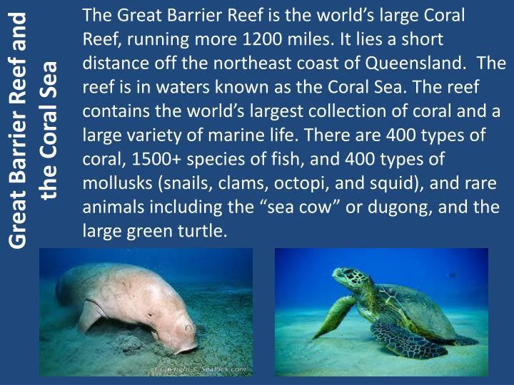 Great Barrier Reef and