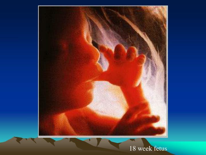 18 week fetus