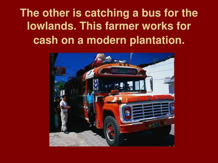 The other is catching a bus for the lowlands this farmer works for cash on a modern plantation