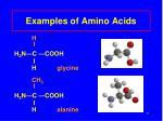 examples of amino acids