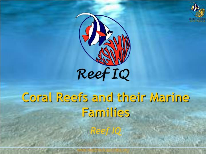 Coral Reefs and their Marine Families