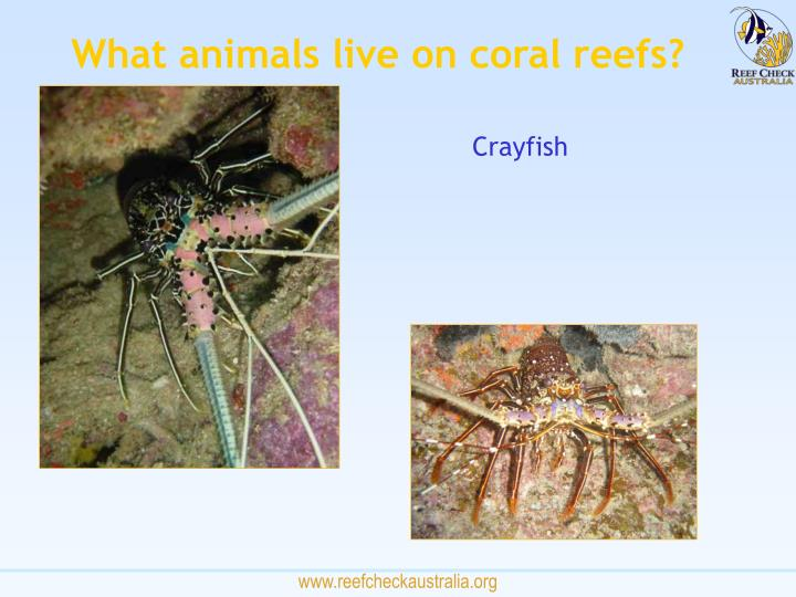 What animals live on coral reefs?