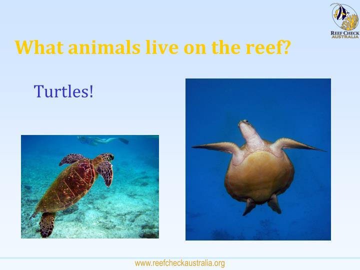 What animals live on the reef?