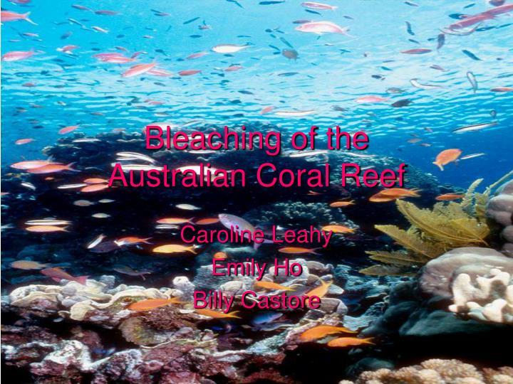 Bleaching of the australian coral reef