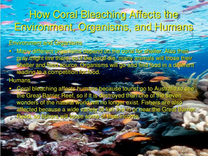 How Coral Bleaching Affects the Environment, Organisms, and Humans