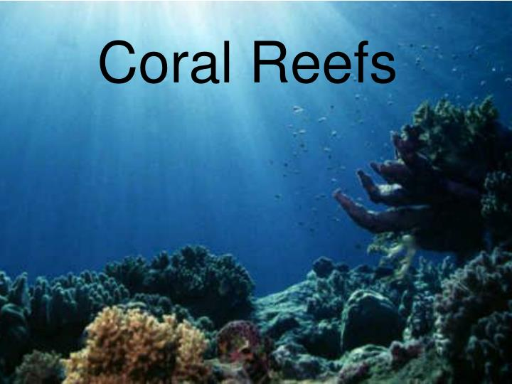 coral reefs n.