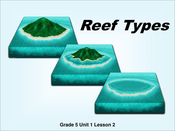 reef types n.