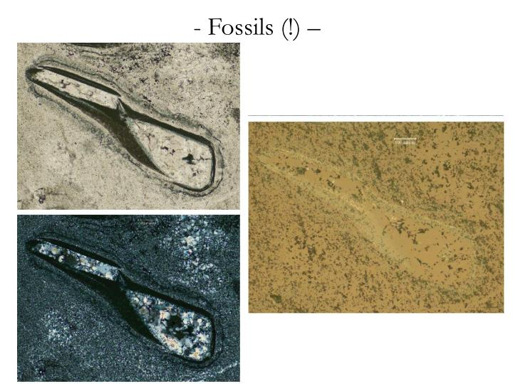 Fossils (!) –