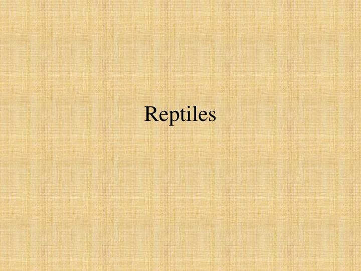 reptiles n.