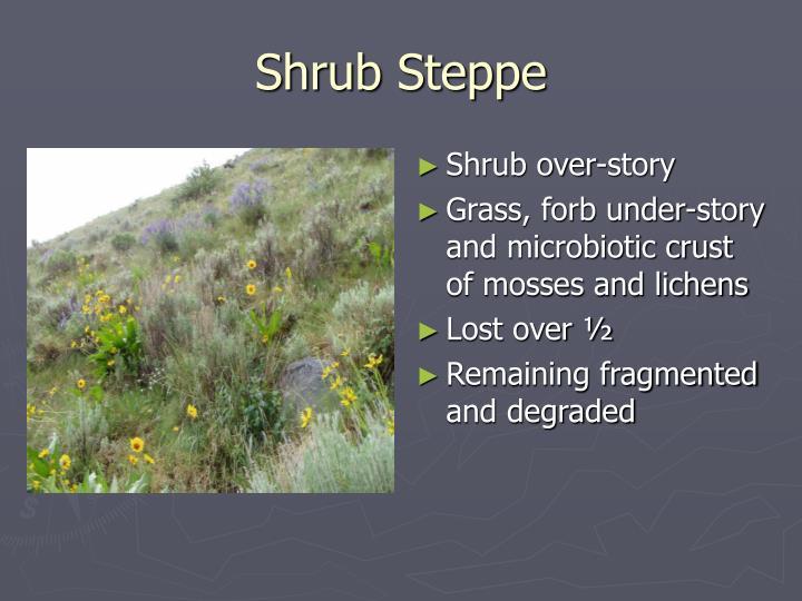 shrub steppe n.