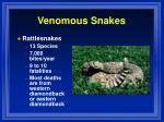 venomous snakes2