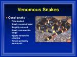 venomous snakes5
