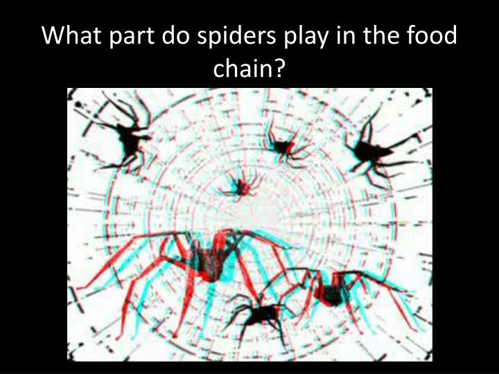 What part do spiders play in the food chain?