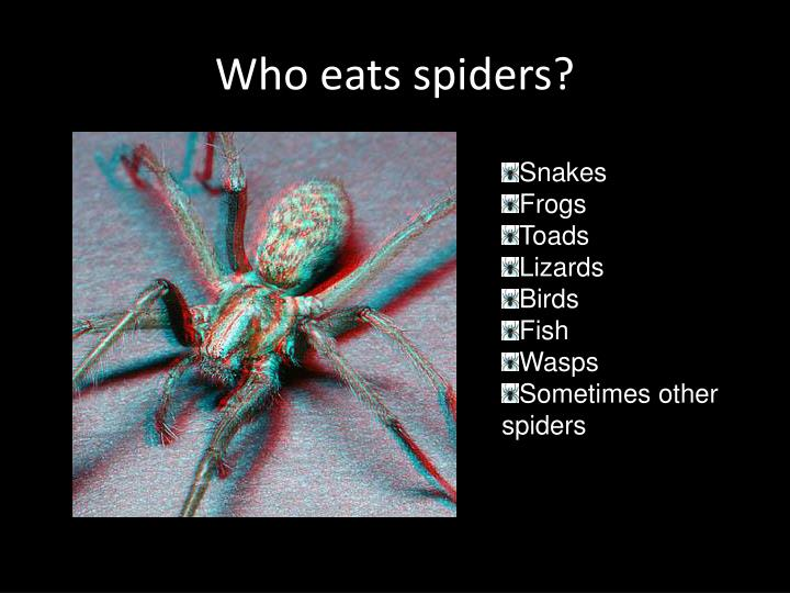 Who eats spiders?