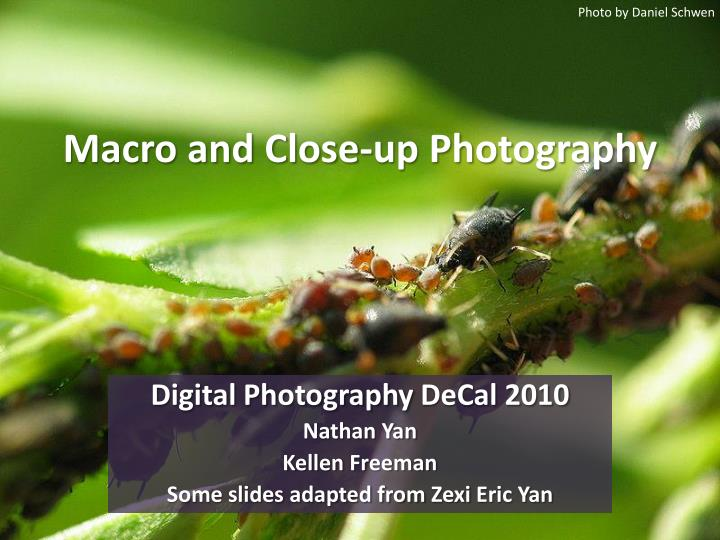 macro and close up photography n.
