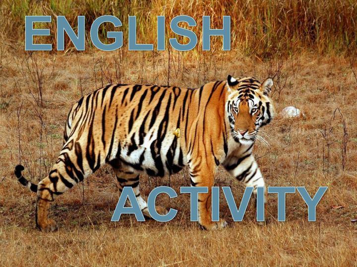 save tigers n.