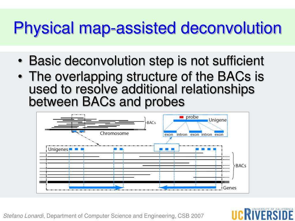 PPT - Deconvoluting BAC-gene Relationships Using a Physical