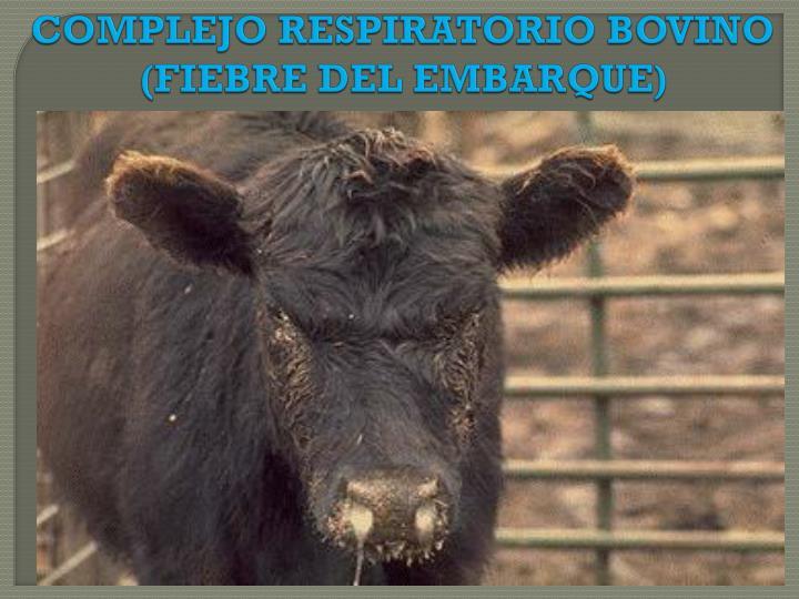 COMPLEJO RESPIRATORIO BOVINO (FIEBRE DEL EMBARQUE)