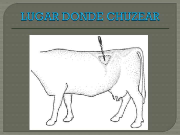 LUGAR DONDE CHUZEAR