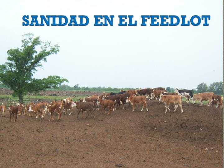 SANIDAD EN EL FEEDLOT