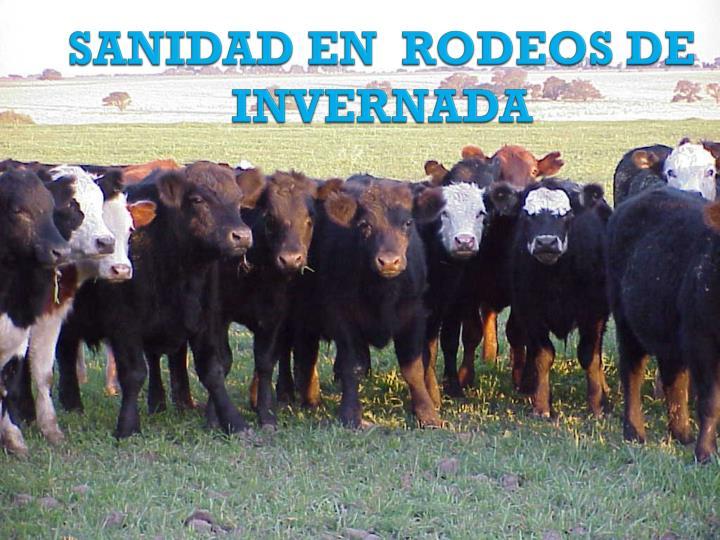 SANIDAD EN  RODEOS DE INVERNADA