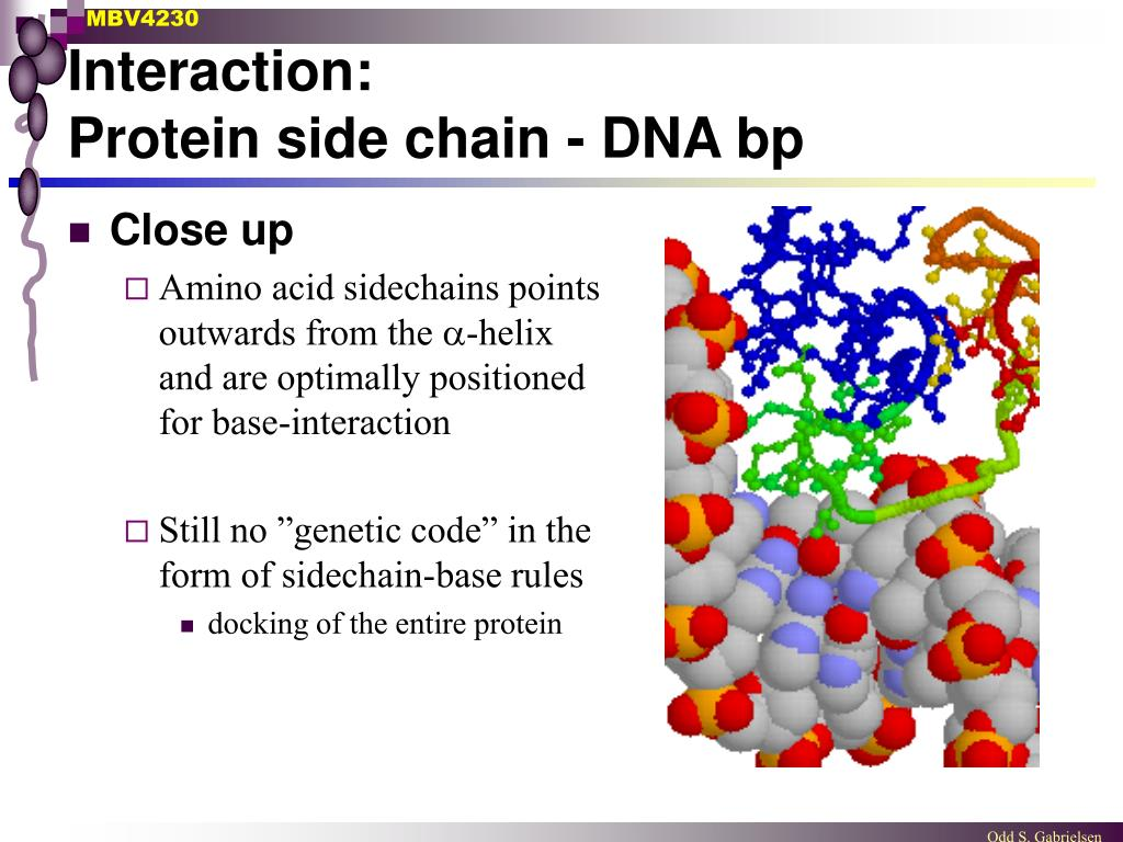 Protein-DNA interactions in the cBbRAGL-nicked 3′TIR