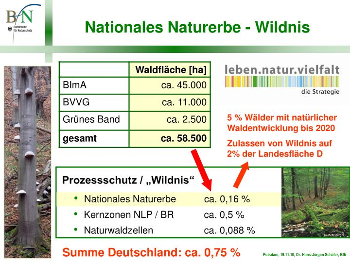 5 % Wälder mit natürlicher Waldentwicklung bis 2020