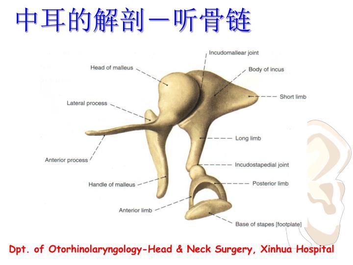 中耳的解剖-听骨链