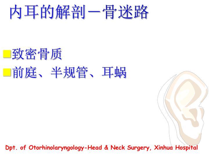 内耳的解剖-