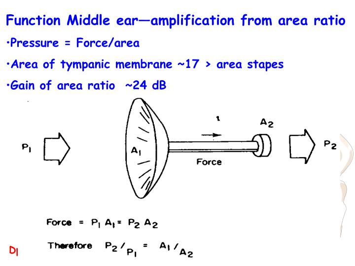 Function Middle ear—amplification from area ratio