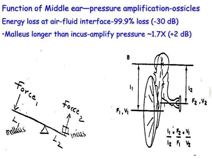 Function of Middle ear—pressure amplification-ossicles