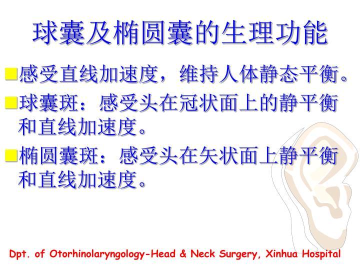 球囊及椭圆囊的生理功能